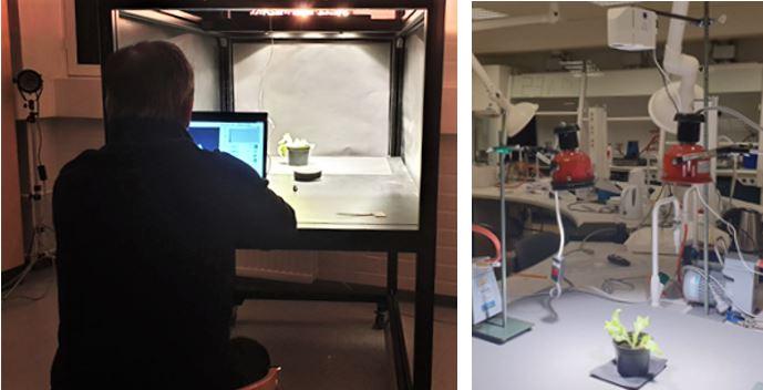 Kaksi valokuvaa, joissa kuvataan kasvia laboratorio-olosuhteissa.