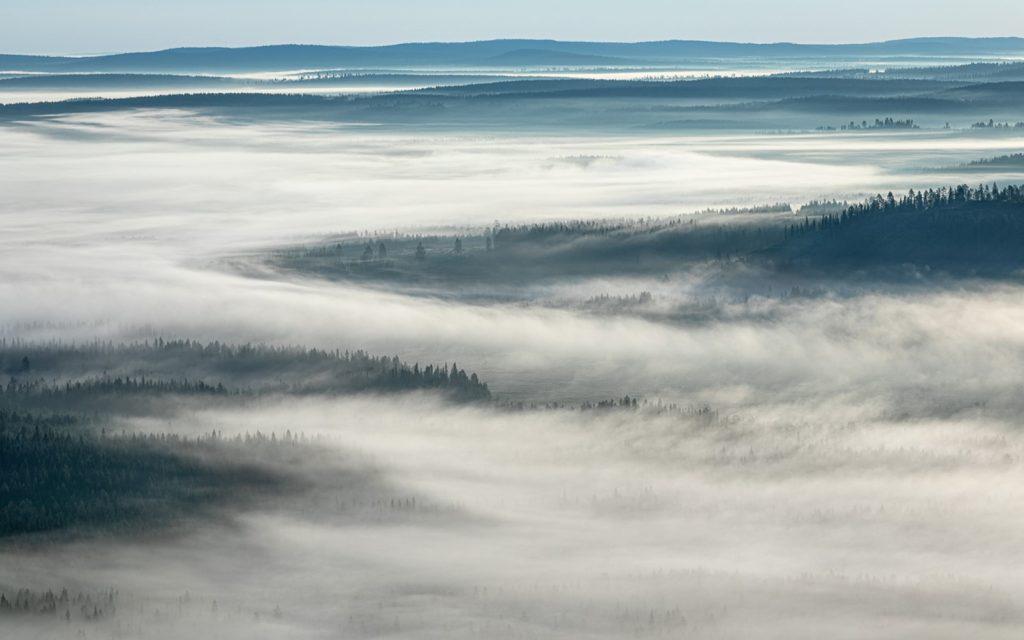 Ylhäältä otettu valokuva, jossa puiden latvuksia kurottautuu pilviverhon yläpuolelle.